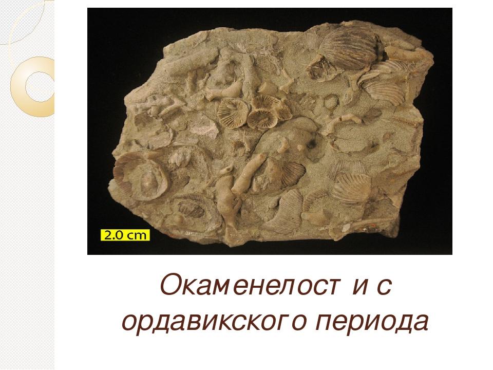 Окаменелости с ордавикского периода
