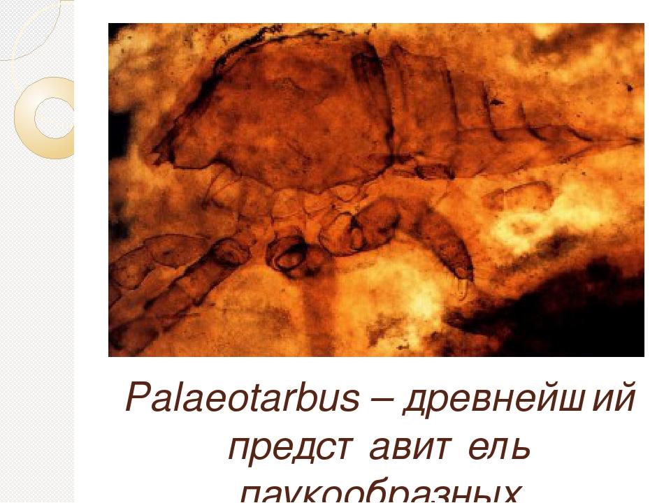 Palaeotarbus – древнейший представитель паукообразных