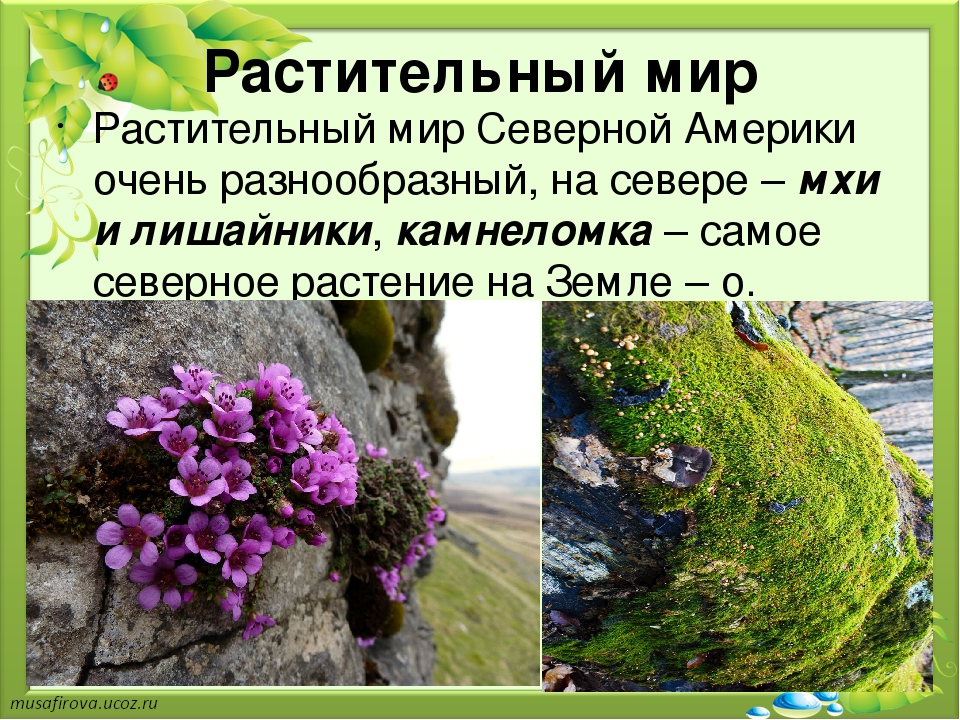 растения северной америки список с фото многие