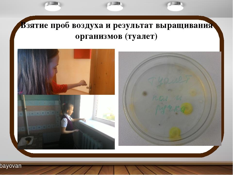 Взятие проб воздуха и результат выращивания организмов (туалет) bayovan