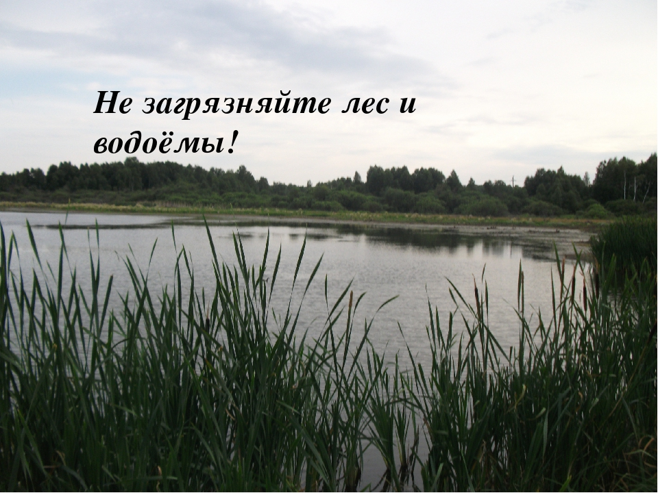Не загрязняйте лес и водоёмы!
