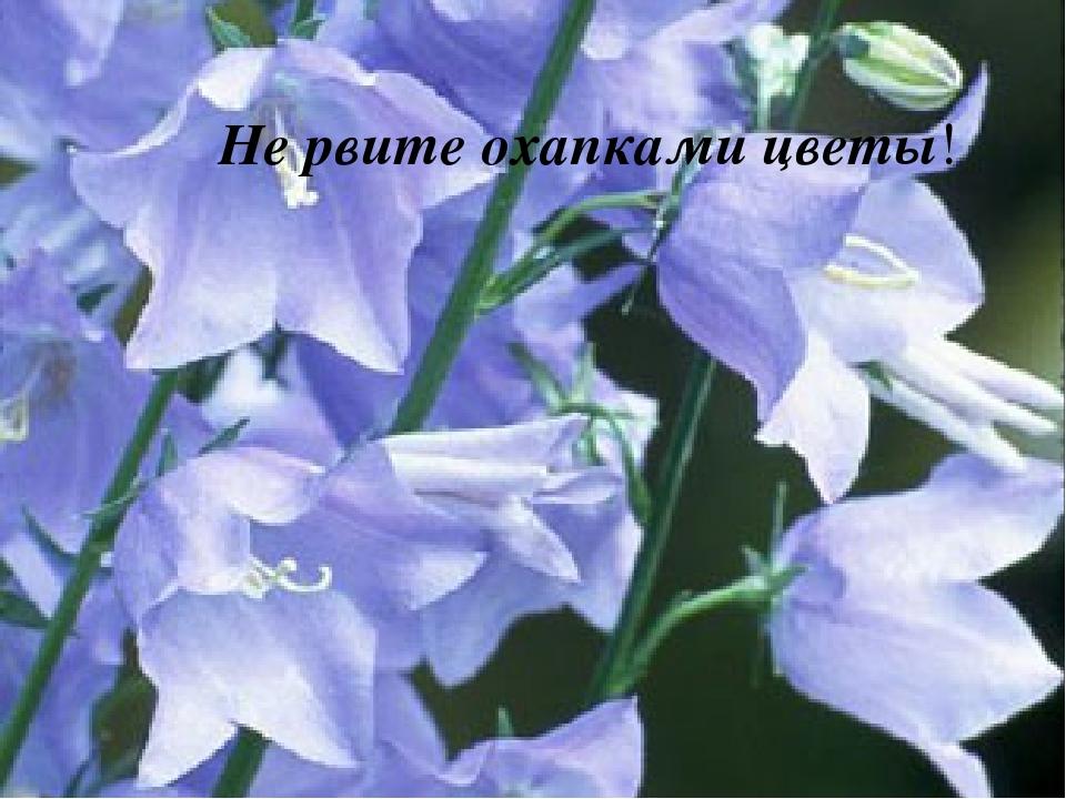 Не рвите охапками цветы!