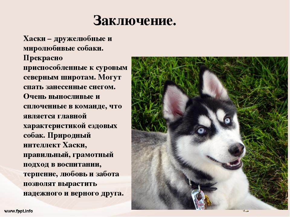 Характеристика собак и картинки тем