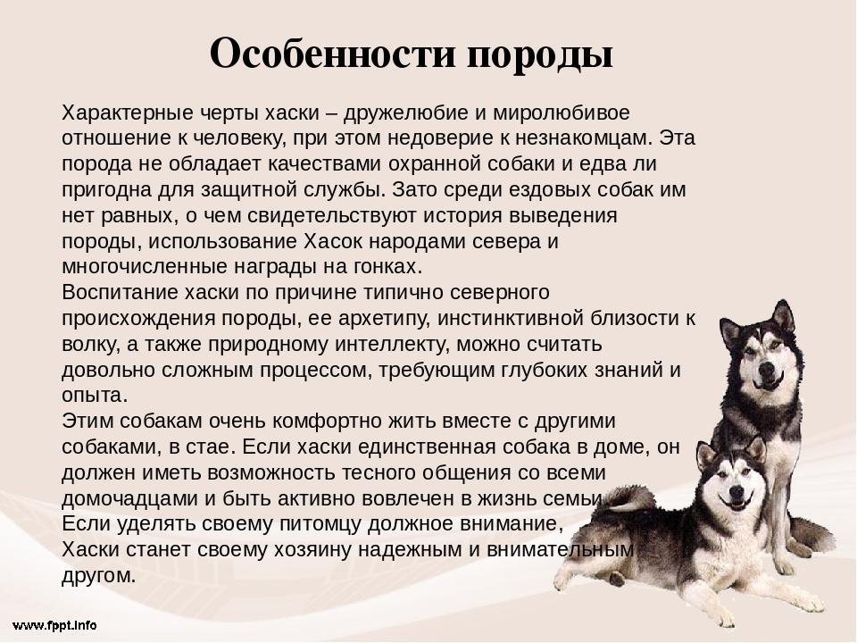 философские рассказы картинки к ним про собаку осторожно