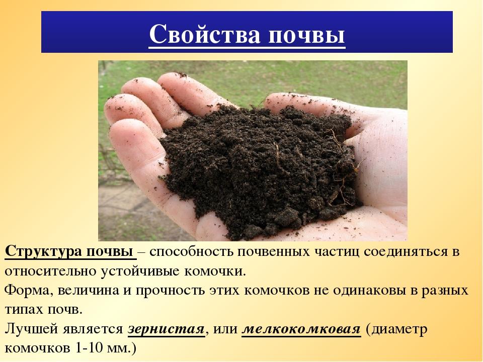 Картинки к теме почва