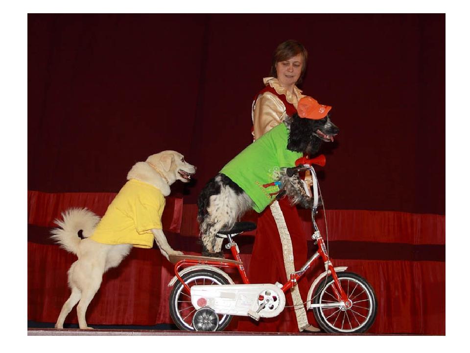западе этот цирк собаки фото признании
