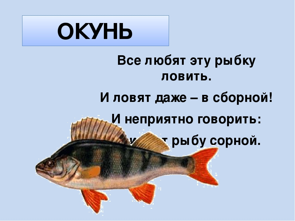 Загадки о рыбах для детей с ответами и картинками