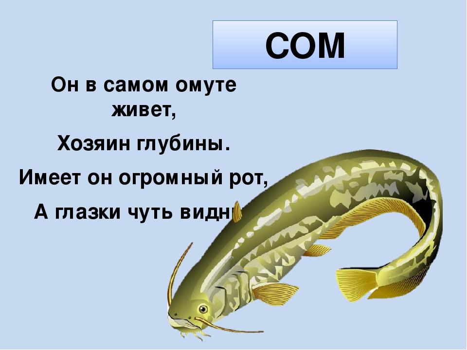 Загадки в картинках про рыб картинки