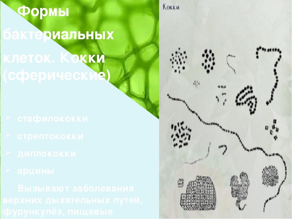 Формы бактериальных клеток. Кокки (сферические) стафилококки стрептококки д...