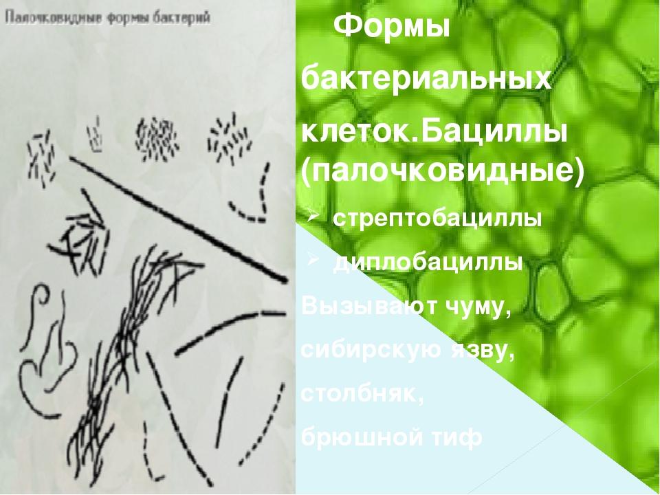 Формы бактериальных клеток.Бациллы (палочковидные) стрептобациллы диплобаци...