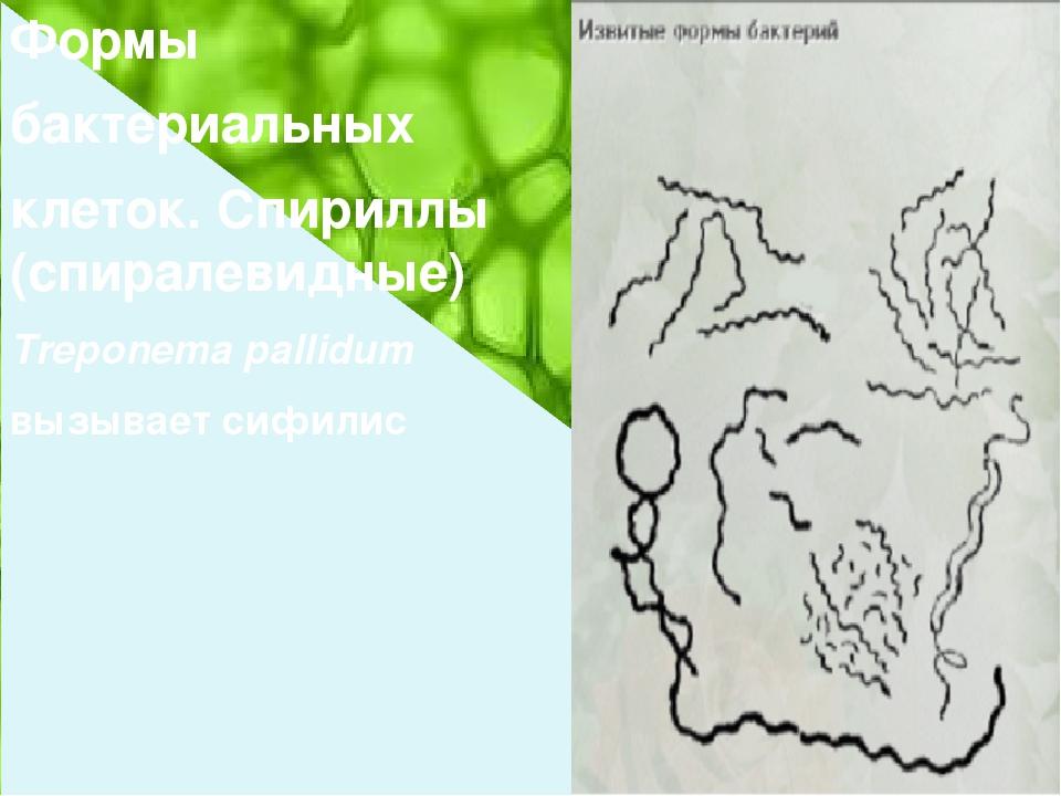 Формы бактериальных клеток. Спириллы (спиралевидные) Treponema pallidum вызы...