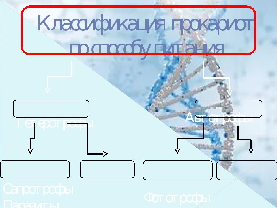 Классификация прокариот по способу питания Гетеротрофы Сапротрофы Паразиты...