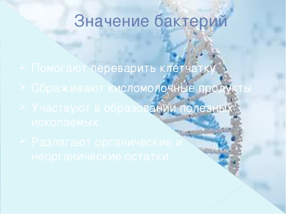 Значение бактерий Помогают переварить клетчатку Сбраживают кисломолочные прод...