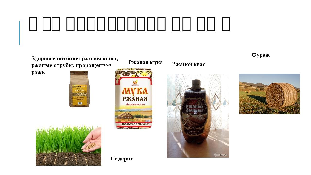 Что производят из ржи Здоровое питание: ржаная каша, ржаные отрубы, пророщенн...