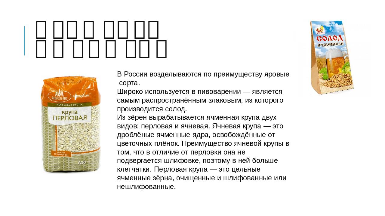 В России возделываются по преимуществуяровыесорта. Широко используется вп...