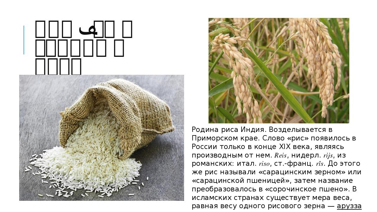 Рис – сын солнца и воды Родина риса Индия. Возделывается в Приморском крае. С...