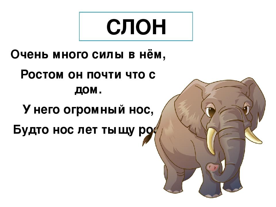 Стихи о слонах русских поэтов