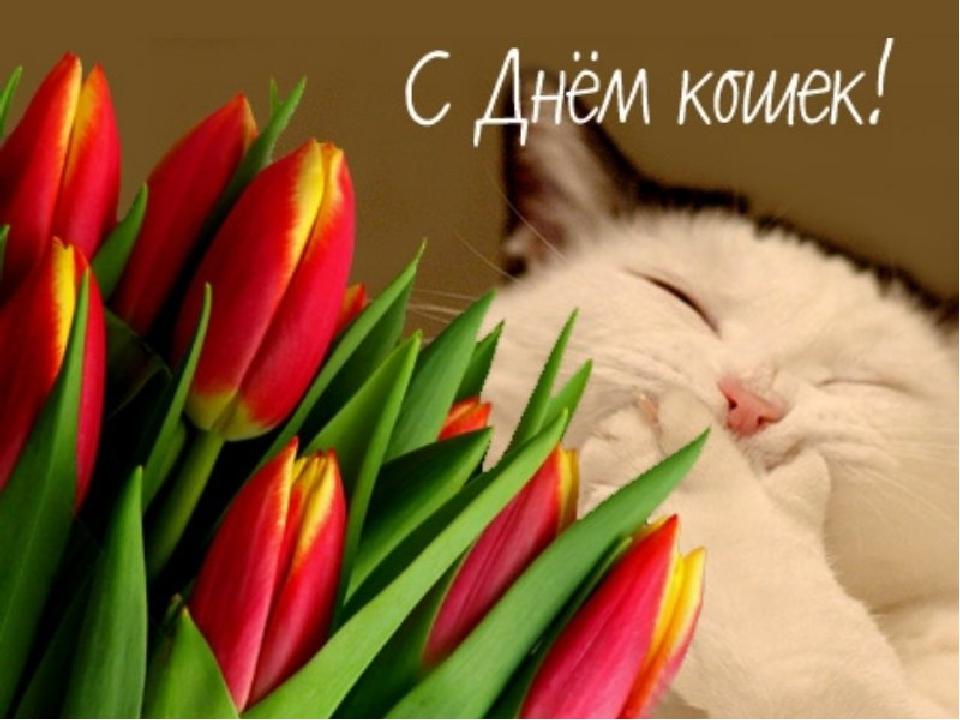 Поздравления с днем кошек картинки, поздравление новым учебным