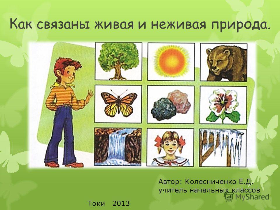 Картинки связь живой и неживой природы для детей