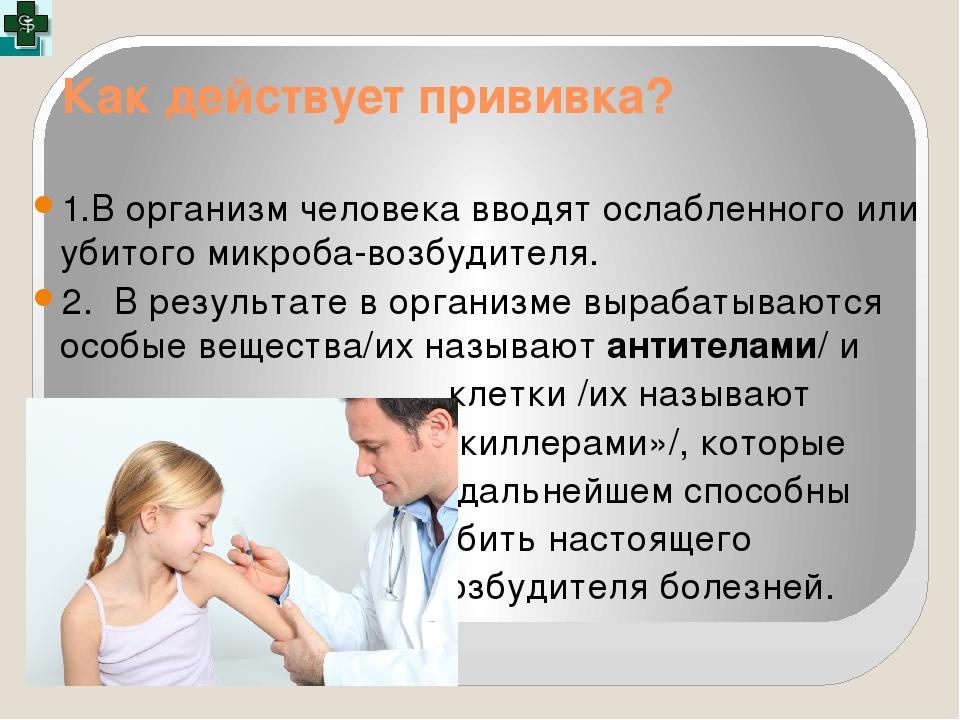 Как действует прививка? 1.В организм человека вводят ослабленного или убитого...