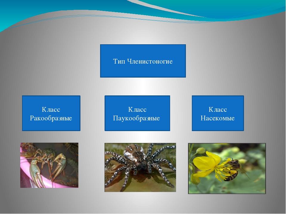 Урок класс насекомые 7 класс