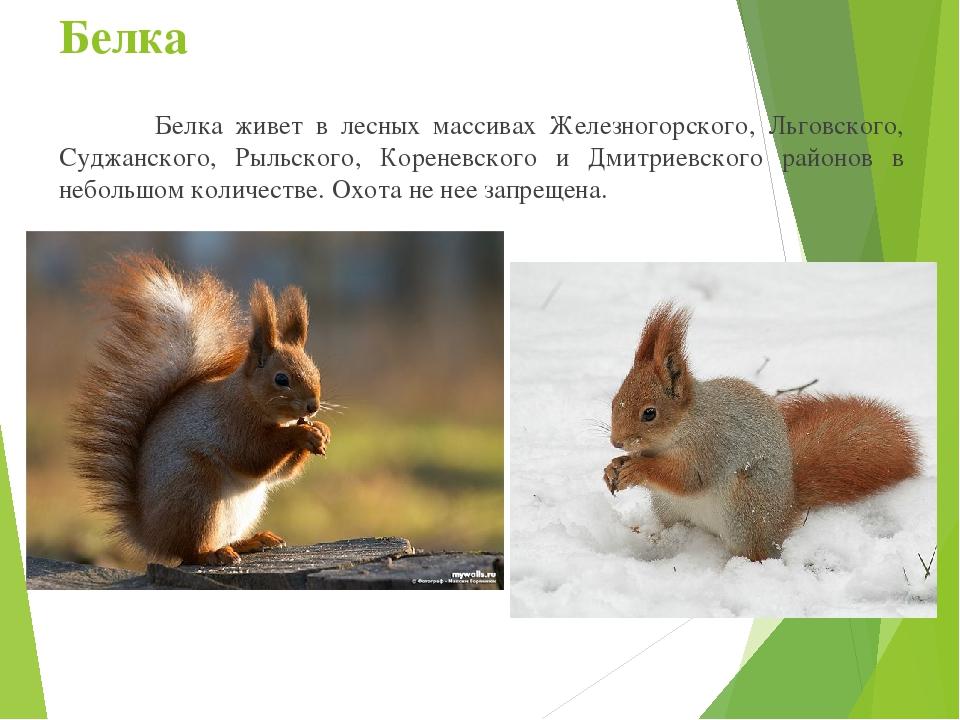 вполне животные курской области фото и описание дольки