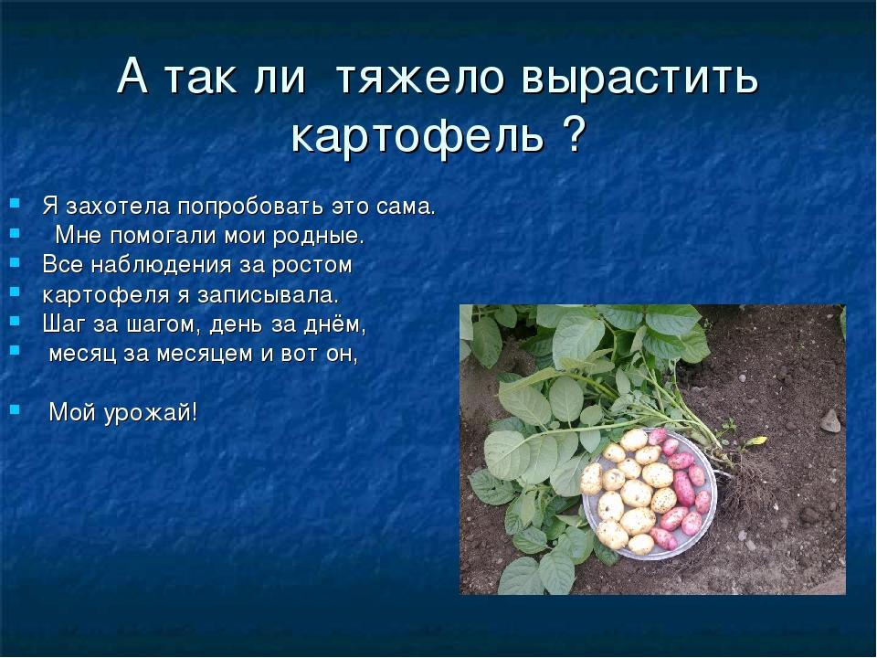 А так ли тяжело вырастить картофель ? Я захотела попробовать это сама. Мне по...