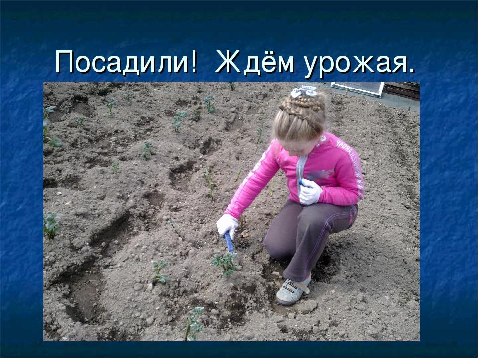 Посадили! Ждём урожая.