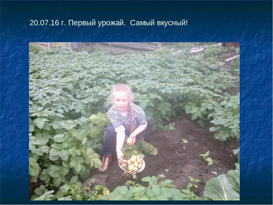 20.07.16 г. Первый урожай. Самый вкусный!!