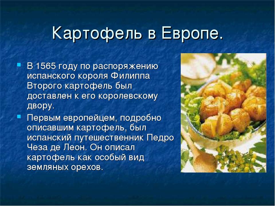 Картофель в Европе. В 1565 году по распоряжению испанского короля Филиппа Вто...