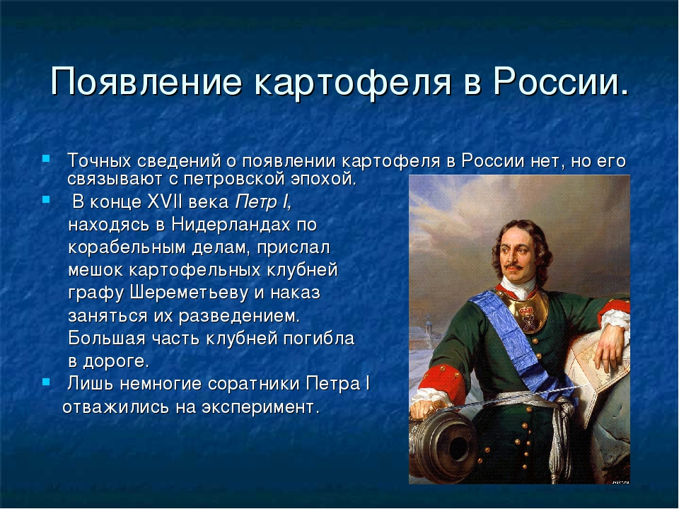 Появление картофеля в России. Точных сведений о появлении картофеля в России...