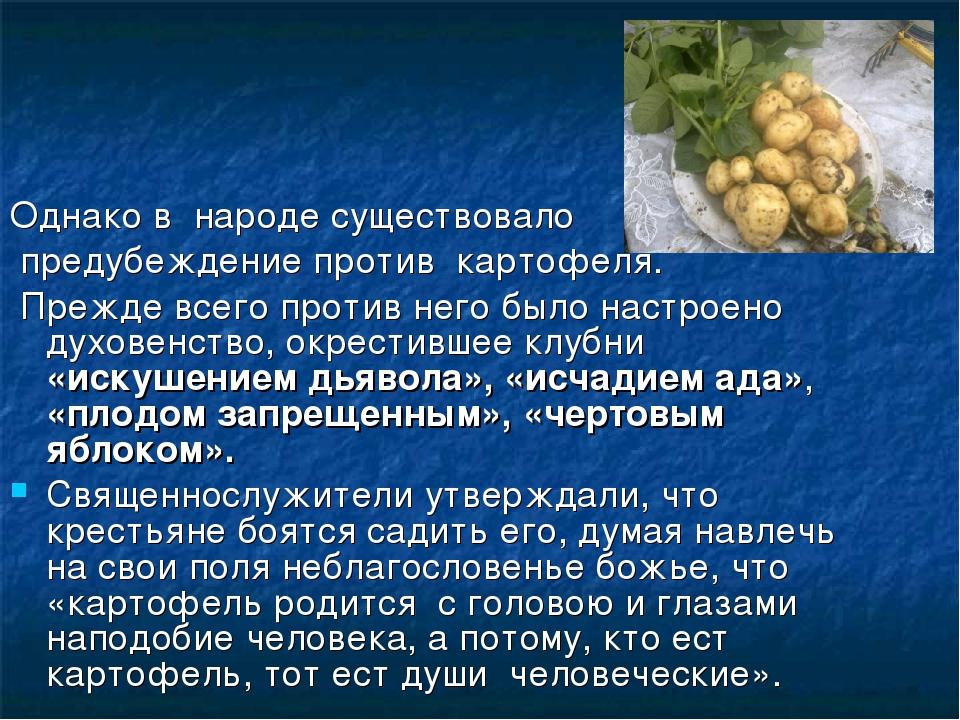 Однако в народе существовало предубеждение против картофеля. Прежде всего п...