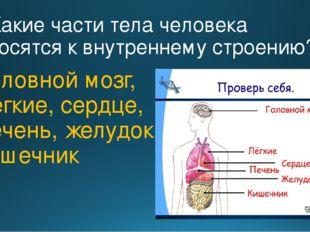 2. Какие части тела человека относятся к внутреннему строению? Головной мозг,
