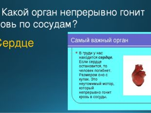 3. Какой орган непрерывно гонит кровь по сосудам? Сердце