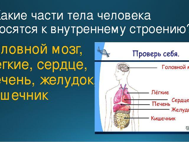 2. Какие части тела человека относятся к внутреннему строению? Головной мозг,...