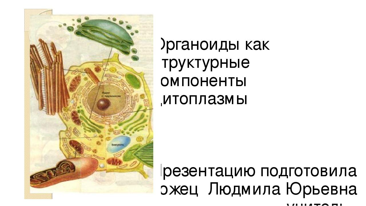 Органоиды как структурные компоненты цитоплазмы Презентацию подготовила Запор...