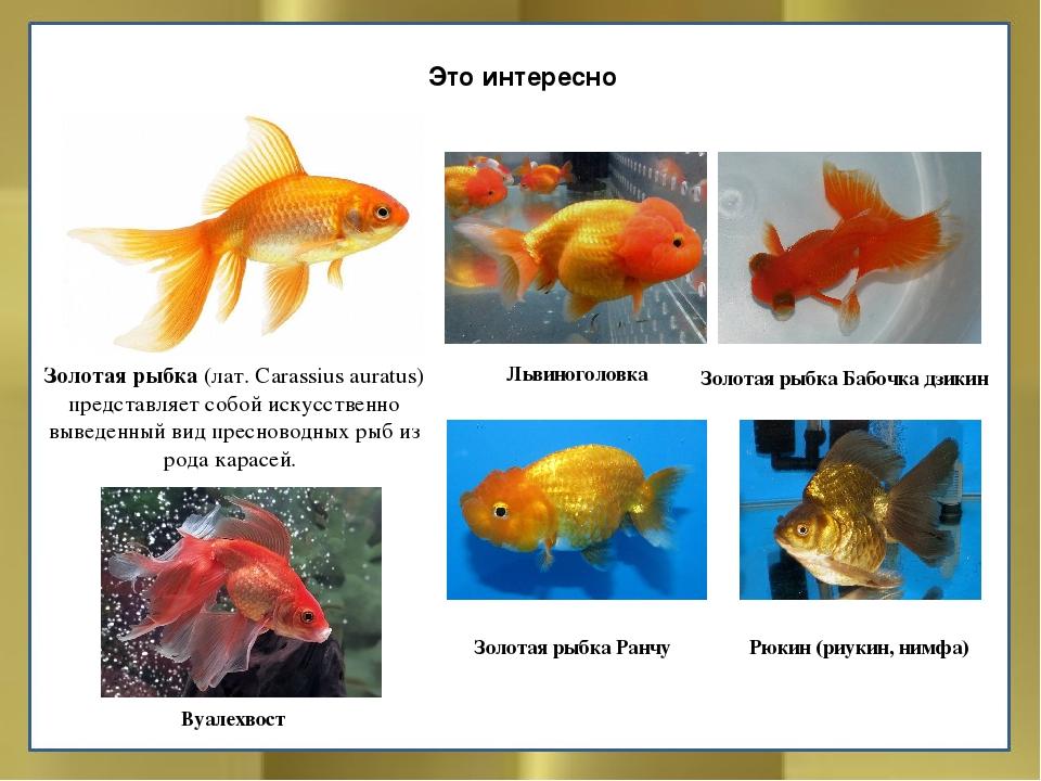 все названия аквариумных рыбок с картинками что будьте