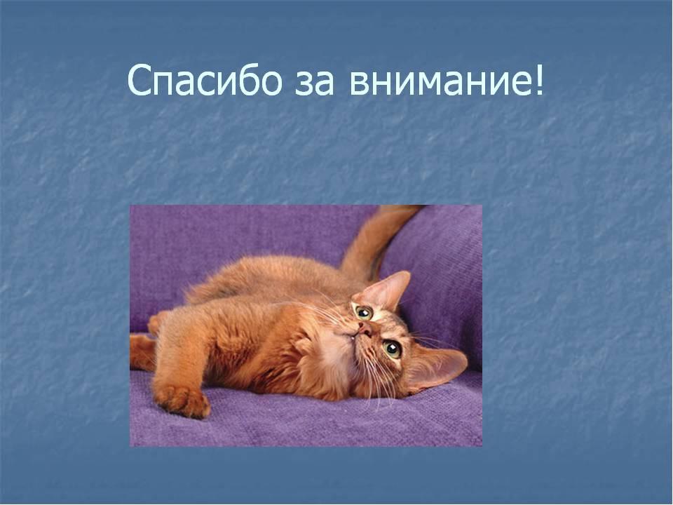 Презентация картинки с животными