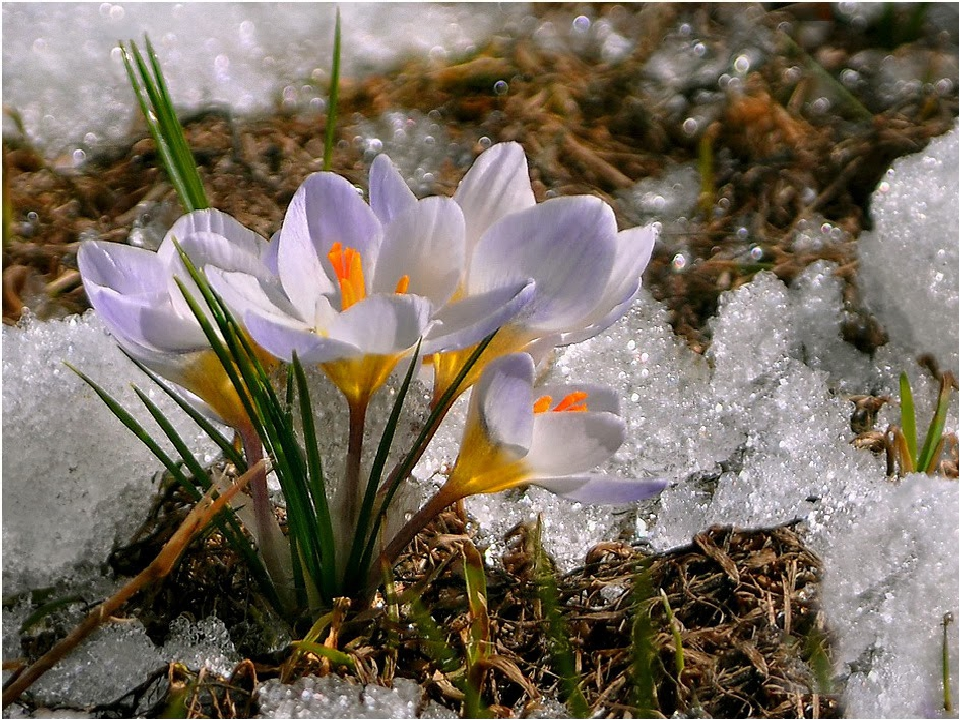 Начало весны картинка