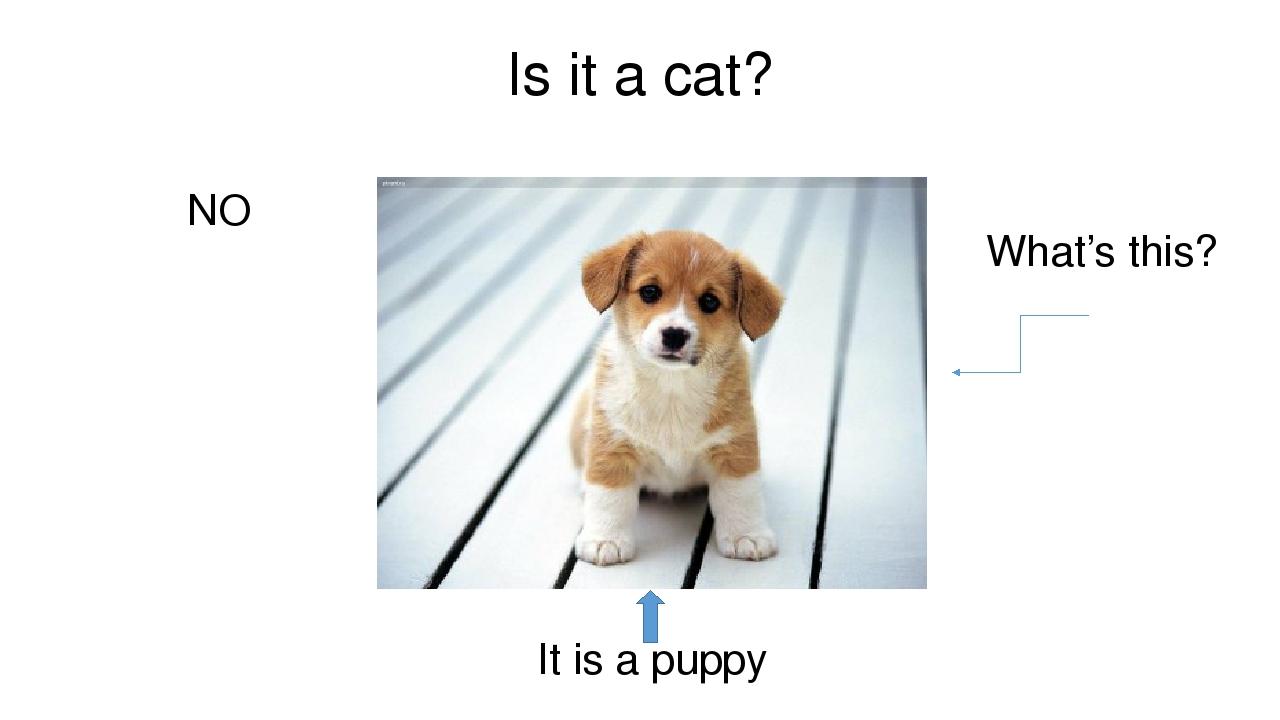 Презентация по английскому языку 6 класс на тему my pats про собак