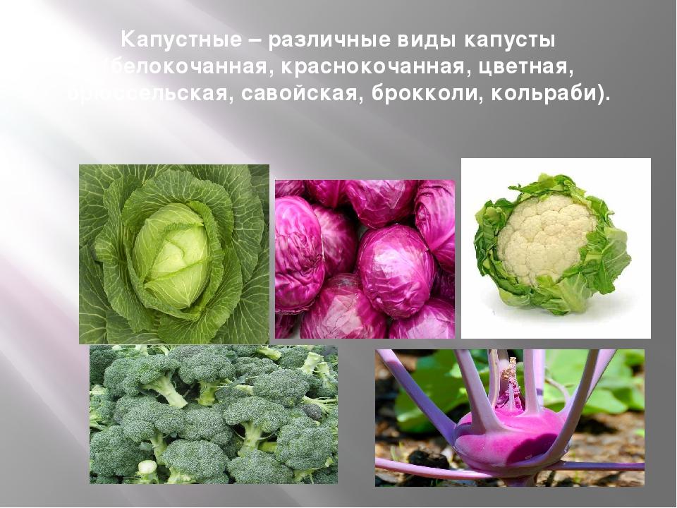 Капустные – различные виды капусты (белокочанная, краснокочанная, цветная, бр...