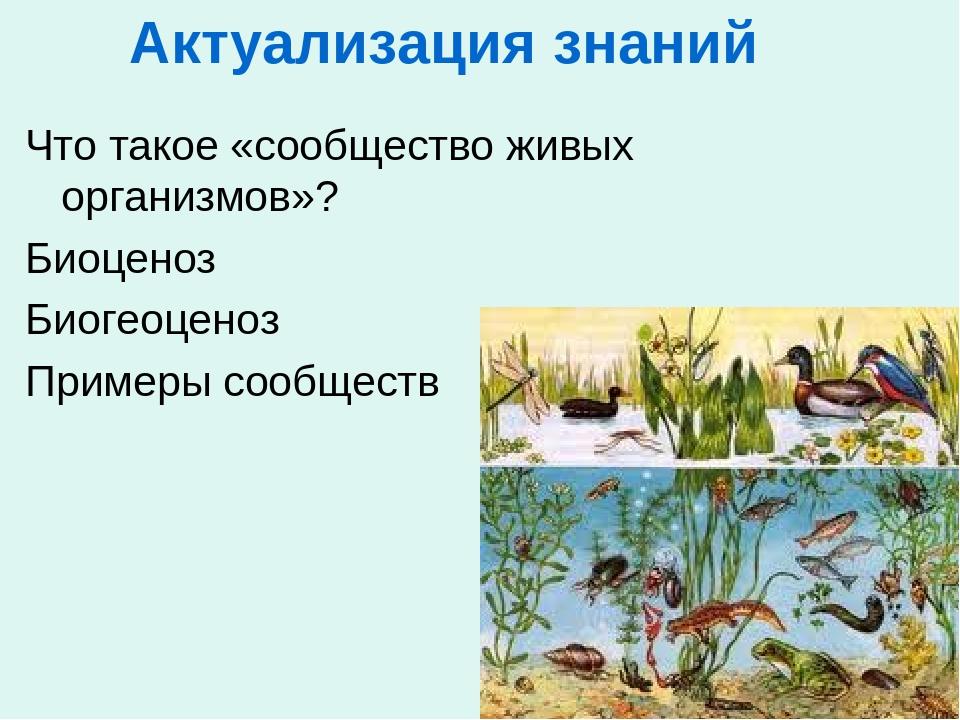Актуализация знаний Что такое «сообщество живых организмов»? Биоценоз Биогеоц...
