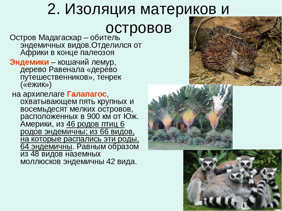 2. Изоляция материков и островов Остров Мадагаскар – обитель эндемичных видов...