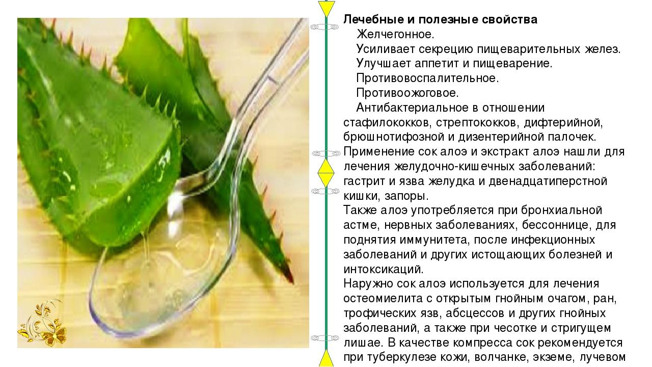 Рецепты из алоэ древовидного