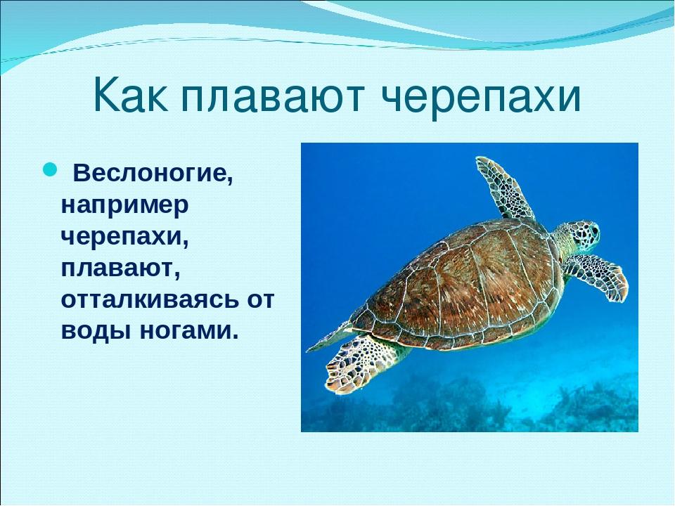 Как плавают черепахи Веслоногие, например черепахи, плавают, отталкиваясь от...