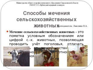 Способы мечения сельскохозяйственных животных Мечение сельскохозяйственных жи