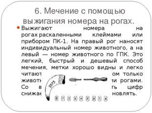 6. Мечение с помощью выжигания номера на рогах. Выжигают номера на рогахраск
