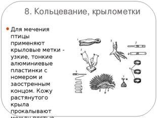 8. Кольцевание, крылометки Для мечения птицы применяют крыловые метки - узкие