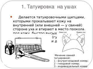 1. Татуировка на ушах Делается татуировочными щипцами, которыми прокалывают к