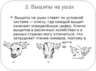 2. Выщипы на ушах Выщипы на ушах ставят по условной системе — ключу, где каж